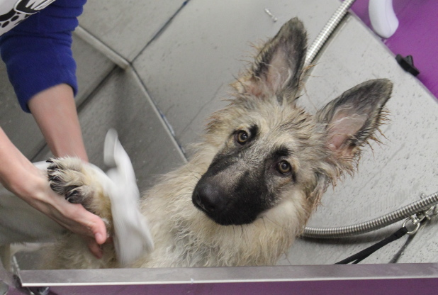 Grooming Salon For Dogs In Hull